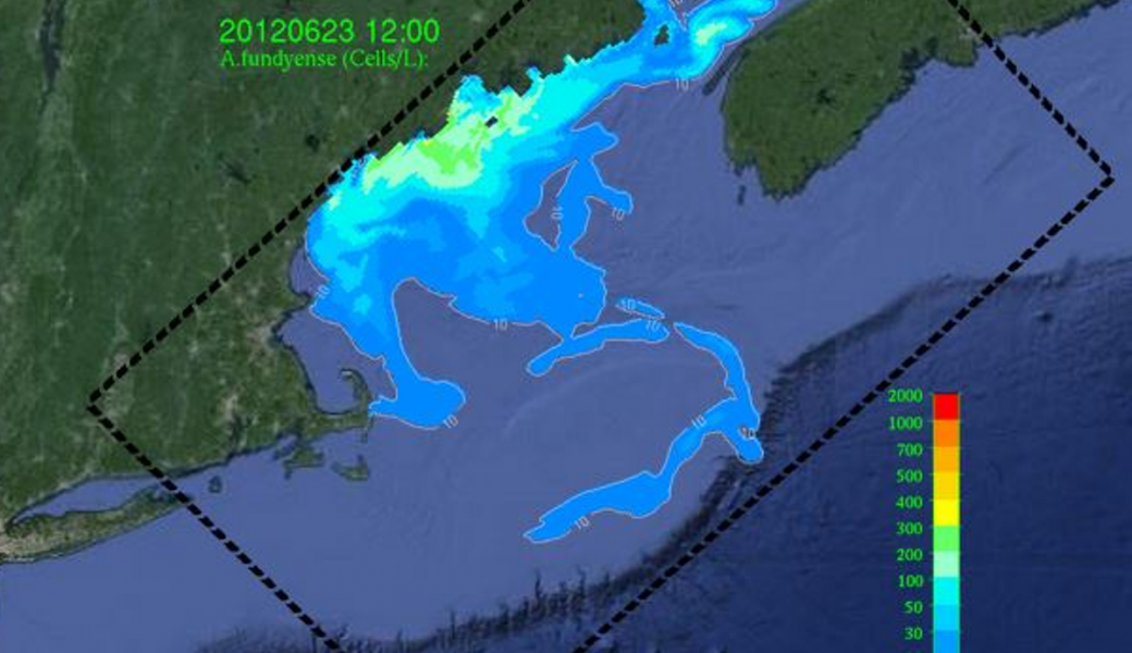 Gulf of Maine HAB image